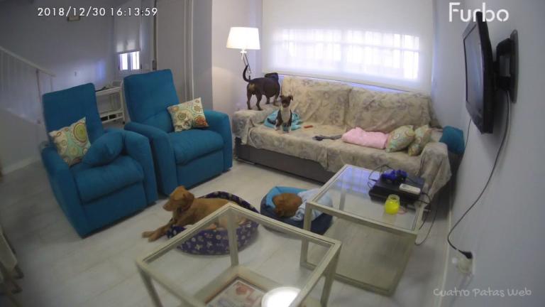 camara vigilancia perros